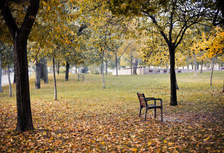 Lonely chair with wooden seat and metal legs is standing in the park among yellow autumn trees and fallen leaves