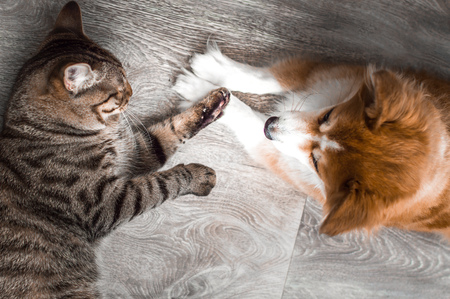Cat and dog play together. Friendship between animals. Close-up Imagens