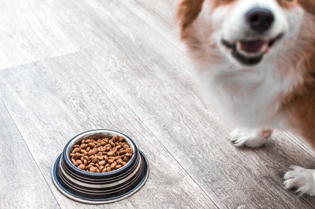 Portrait of a dog with a bowl of dry food. Dog food concept