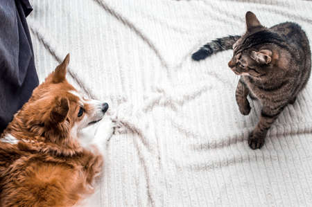 Dog and cat are sitting on the floor next to the room Banco de Imagens