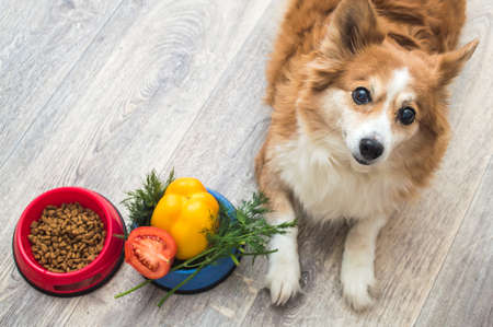 Dry food and a bowl of vegetables are on the kitchen floor next to the dog. Dog food concept.