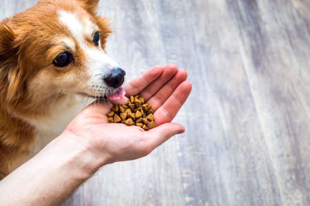 dog eats dry food from the hand of its owner Banco de Imagens