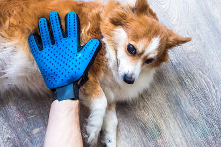 owner is combing the dog's coat with a gloved hand for combing the coat