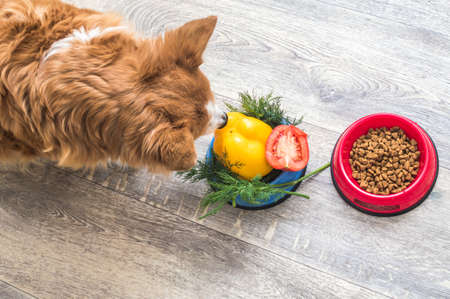Dry food and a bowl of vegetables are on the kitchen floor next to the dog.