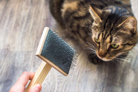 cat is combing the wool with a brush in the room Banco de Imagens