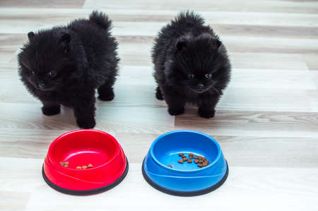 Two black puppies with food bowls on the kitchen floor