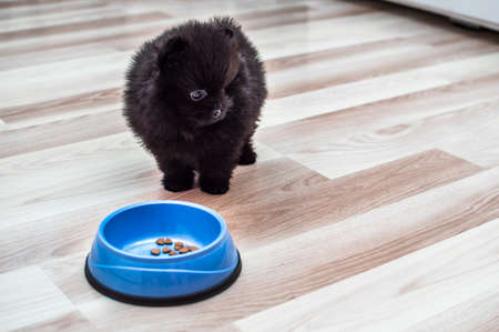 puppy stands by a bowl of dry food on the kitchen floor Banco de Imagens