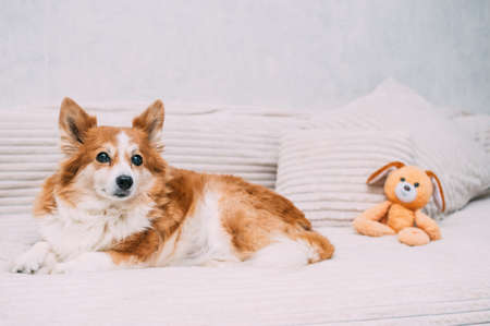 dog lies on a blanket with a pillow and a toy