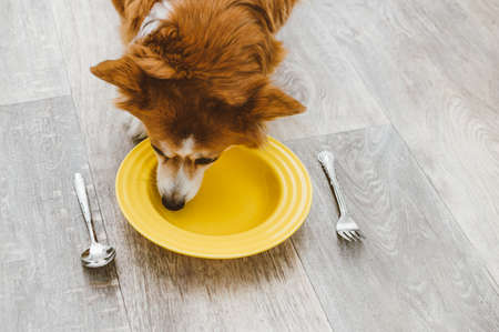 dog eats from a yellow plate with a spoon and fork. Dog food concept