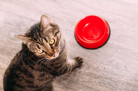 cat is waiting for feeding on the kitchen floor. Cat food concept