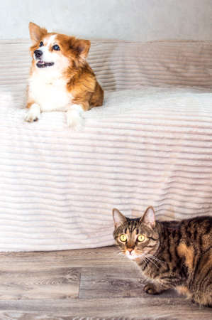 Portrait of a cat and a dog in the room. dog sits on the bed, cat is next to the bed