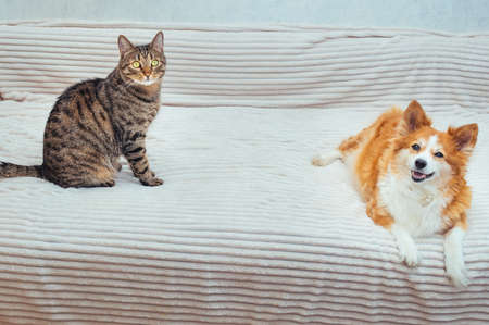 Cat and dog sit next to each other on the bed Banco de Imagens