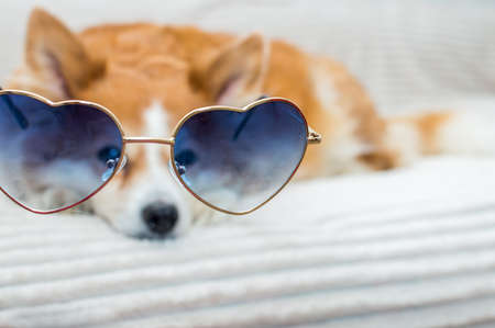 Close-up portrait of a dog in blue sunglasses. Soft focus Banco de Imagens