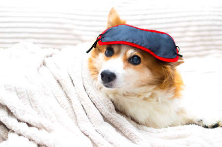 Portrait of a dog with a sleep mask on his head Banco de Imagens