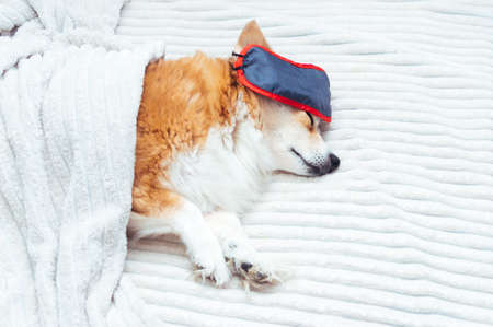 dog sleeps in bed with a sleep mask over his eyes