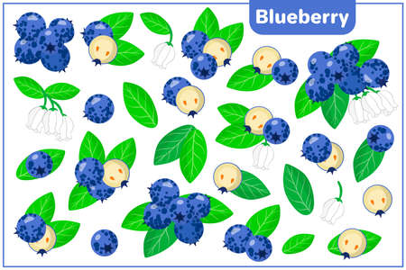 Set of vector cartoon illustrations with whole, half, cut slice Blueberry exotic fruits, flowers and leaves isolated on white background
