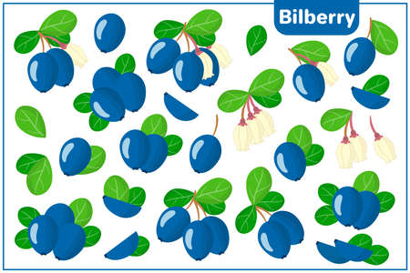Set of vector cartoon illustrations with whole, half, cut slice Bilberry exotic fruits, flowers and leaves isolated on white background