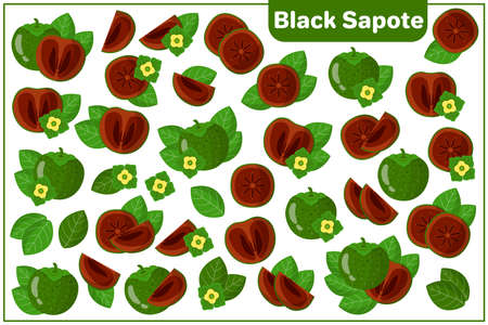 Set of vector cartoon illustrations with whole, half, cut slice Black Sapote exotic fruits, flowers and leaves isolated on white background Illustration