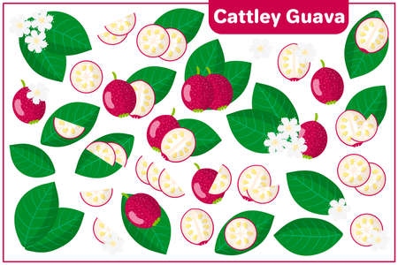 Set of vector cartoon illustrations with whole, half, cut slice Cattley guava exotic fruits, flowers and leaves isolated on white background