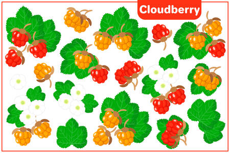Set of vector cartoon illustrations with Cloudberry exotic fruits, flowers and leaves isolated on white background