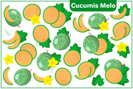 Set of vector cartoon illustrations with whole, half, cut slice Cucumis melo exotic fruits, flowers and leaves isolated on white background Illustration