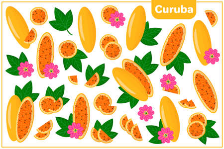 Set of vector cartoon illustrations with whole, half, cut slice Curuba exotic fruits, flowers and leaves isolated on white background Illustration