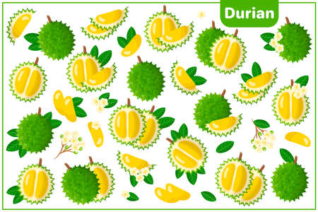 Set of vector cartoon illustrations with whole, half, cut slice Durian exotic fruits, flowers and leaves isolated on white background