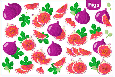 Set of vector cartoon illustrations with whole, half, cut slice Figs exotic fruits, flowers and leaves isolated on white background