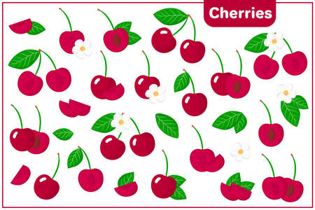 Set of vector cartoon illustrations with whole, half, cut slice Cherries exotic fruits, flowers and leaves isolated on white background