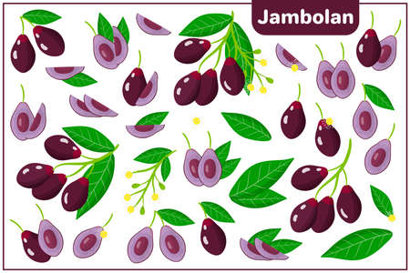 Set of vector cartoon illustrations with whole, half, cut slice Jambolan exotic fruits, flowers and leaves isolated on white background Vettoriali