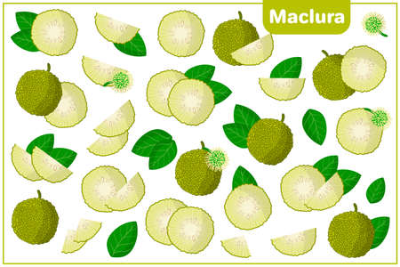 Set of vector cartoon illustrations with whole, half, cut slice Maclura exotic fruits, flowers and leaves isolated on white background