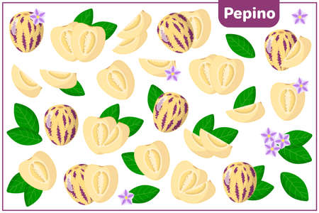 Set of vector cartoon illustrations with whole, half, cut slice Pepino exotic fruits, flowers and leaves isolated on white background