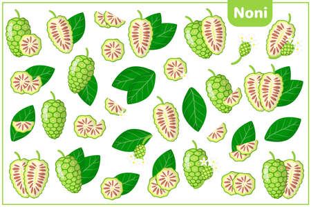 Set of vector cartoon illustrations with whole, half, cut slice Noni exotic fruits, flowers and leaves isolated on white background