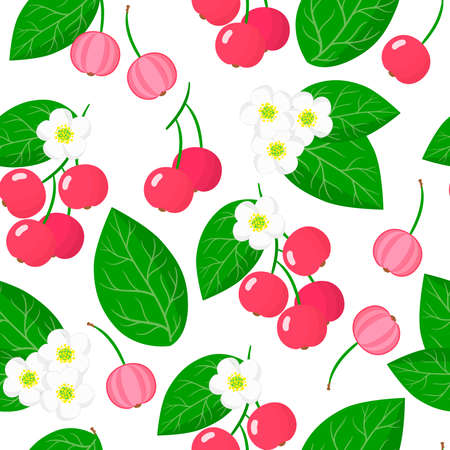 Vector cartoon seamless pattern with Muntingia calabura or Capulin exotic fruits, flowers and leafs on white background for web, print, cloth texture or wallpaper