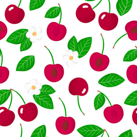 Vector cartoon seamless pattern with Prunus avium or Cherries exotic fruits, flowers and leafs on white background for web, print, cloth texture or wallpaper
