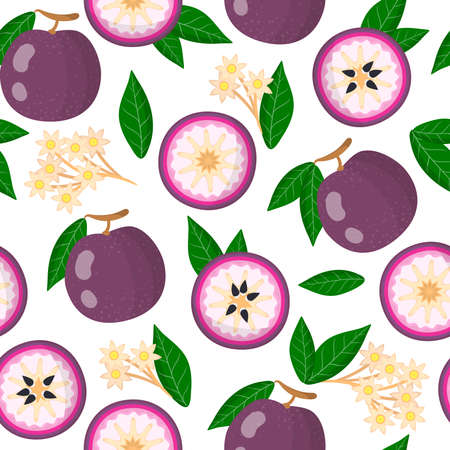 Vector cartoon seamless pattern with Chrysophyllum cainito or purple star apple exotic fruits, flowers and leafs on white background for web, print, cloth texture or wallpaper