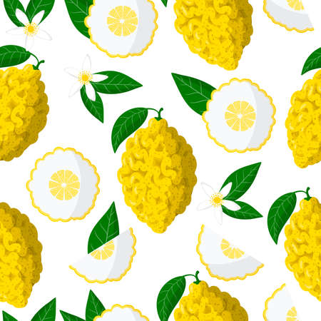 Vector cartoon seamless pattern with Citrus medica or Citron exotic fruits, flowers and leafs on white background for web, print, cloth texture or wallpaper 矢量图像