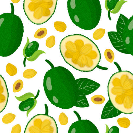 Vector cartoon seamless pattern with Artocarpus heterophyllus or Jackfruit exotic fruits, flowers and leafs on white background for web, print, cloth texture or wallpaper