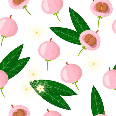 Vector cartoon seamless pattern with Syzygium jambos or Pomarose exotic fruits, flowers and leafs on white background for web, print, cloth texture or wallpaper Иллюстрация