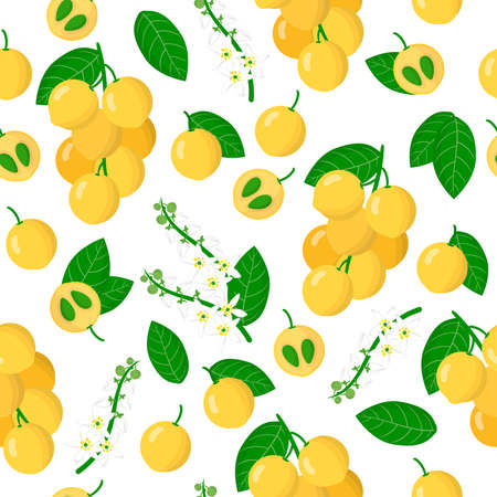 Vector cartoon seamless pattern with Lansium parasiticum or Langsat exotic fruits, flowers and leafs on white background for web, print, cloth texture or wallpaper