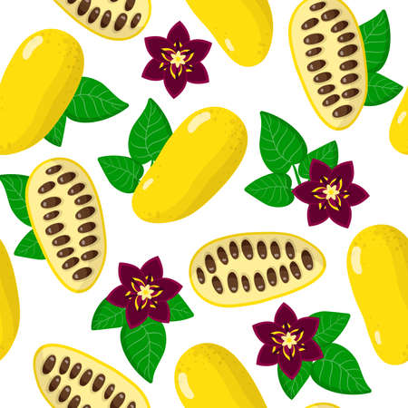 Vector cartoon seamless pattern with Lardizabala exotic fruits, flowers and leafs on white background for web, print, cloth texture or wallpaper