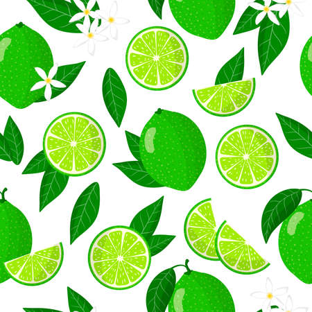 Vector cartoon seamless pattern with Citrus aurantiifolia or Key lime exotic fruits, flowers and leafs on white background for web, print, cloth texture or wallpaper Иллюстрация