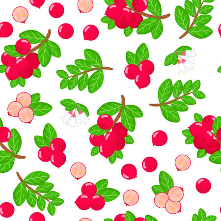 Vector cartoon seamless pattern with Vaccinium vitis-idaea or lingonberry exotic fruits, flowers and leafs on white background for web, print, cloth texture or wallpaper