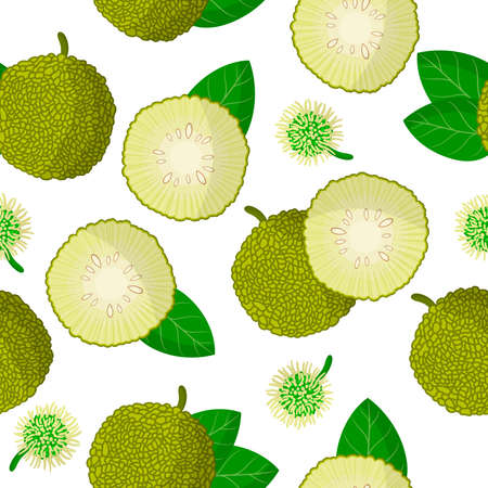Vector cartoon seamless pattern with Maclura pomifer or Monkey bread exotic fruits, flowers and leafs on white background for web, print, cloth texture or wallpaper