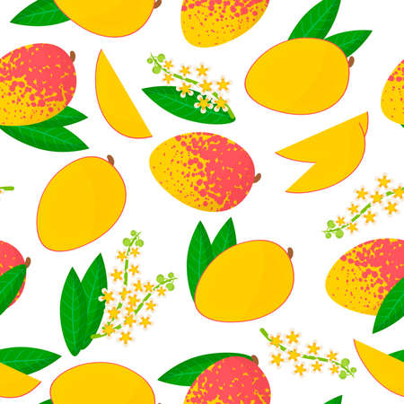 Vector cartoon seamless pattern with Mangifera indica or Mango exotic fruits, flowers and leafs on white background for web, print, cloth texture or wallpaper