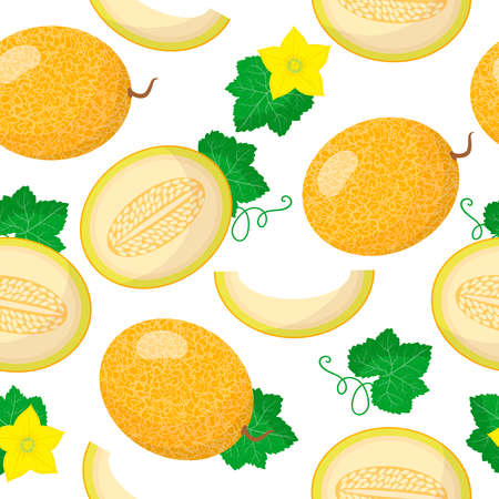 Vector cartoon seamless pattern with Cucumis melo or Melon exotic fruits, flowers and leafs on white background for web, print, cloth texture or wallpaper