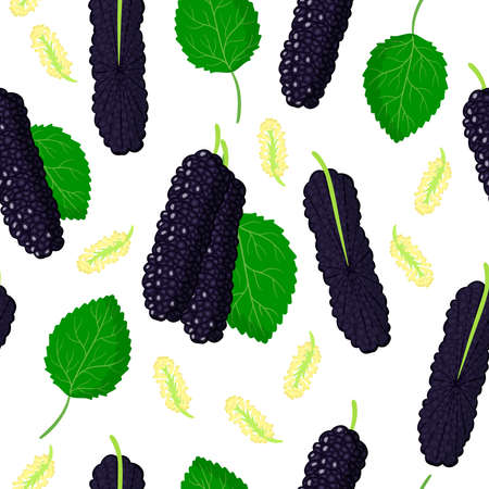 Vector cartoon seamless pattern with Morus macroura Pakistani or hybrid black Mulberry exotic fruits, flowers and leafs on white background for web, print, cloth texture or wallpaper Çizim