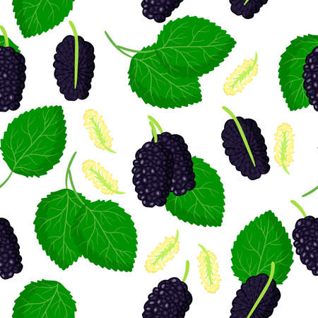 Vector cartoon seamless pattern with Black Morus or mulberries exotic fruits, flowers and leafs on white background for web, print, cloth texture or wallpaper