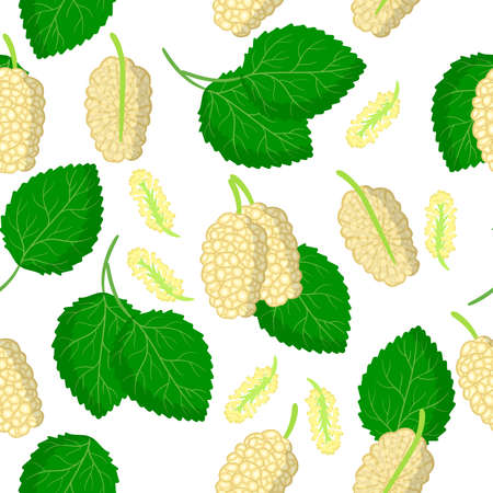 Vector cartoon seamless pattern with Morus alba or mulberries exotic fruits, flowers and leafs on white background for web, print, cloth texture or wallpaper Иллюстрация