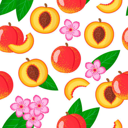 Vector cartoon seamless pattern with Prunus persica nucipersica or Nectarine exotic fruits, flowers and leafs on white background for web, print, cloth texture or wallpaper Vetores